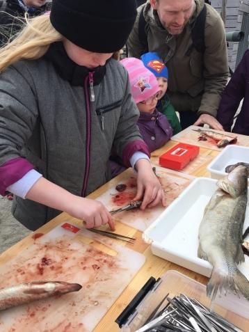 En sej pige i færd med at lære at dissekere en fisk