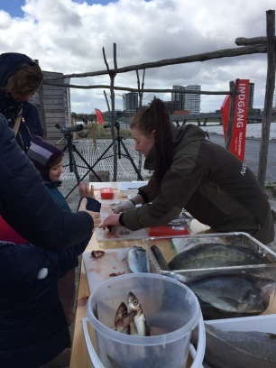 Til fødselsdagsarrangementet kom en række naturvejledere ud på naturcenteret for at lære børnene og deres familier at dissekere fisk